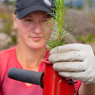 Skogsplantering och plantförsäljning